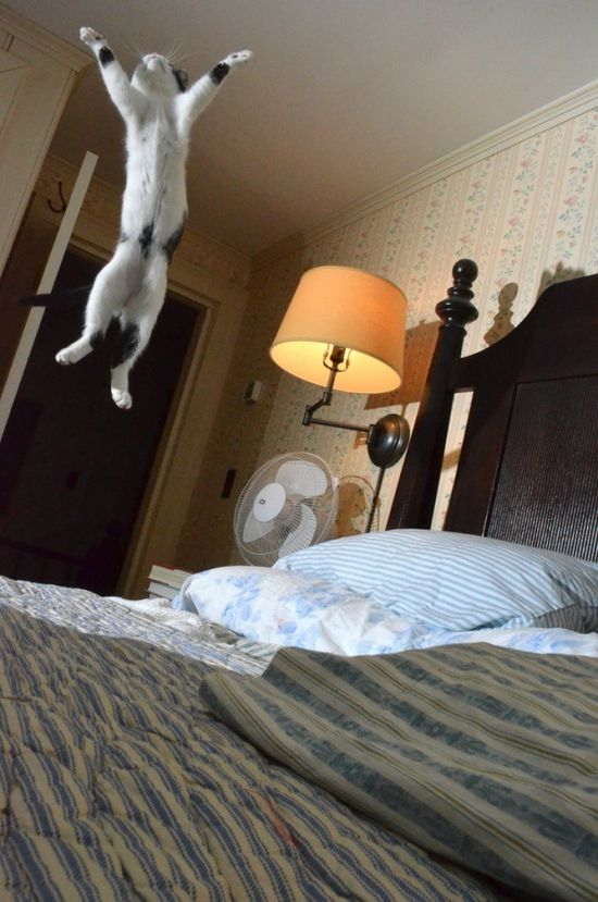 How come he can jump on the bed?