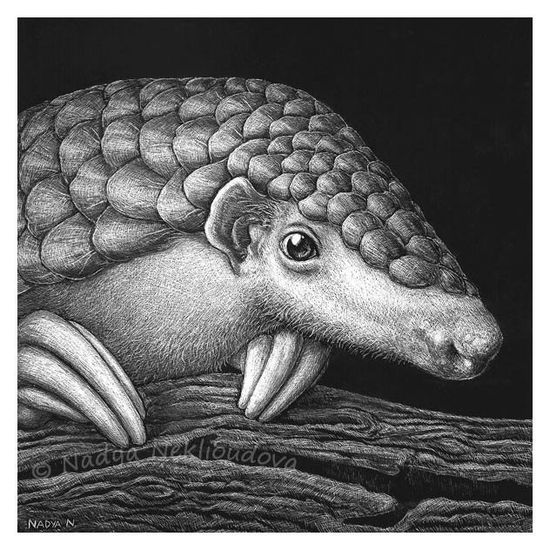 Pangolin Portrait - art print 8x8 inches (20x20cm) - wildlife drawing, rare endangered animal species