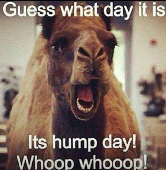 Hump day!!