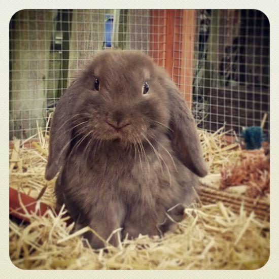 beautiful bunny :)