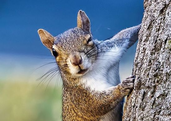 Daily Cuteness – 10 Animals Winking At You