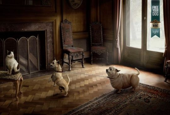 Masterdog light: Free your dog, Hall by Prolam Y    Animals in Print Ads
