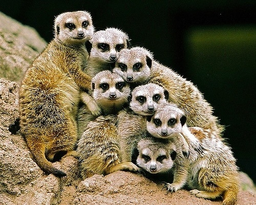 Wild ANIMALS by tami