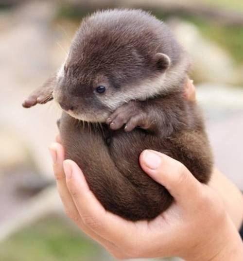OhEmGee baby animals (21 photos)