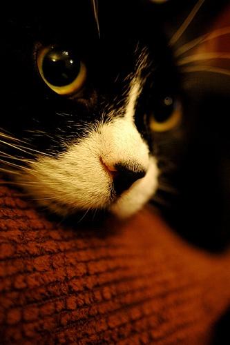 Becks by Caz Harrison, via Flickr