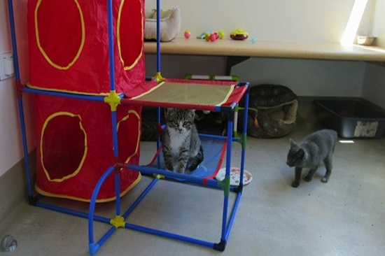 First Eco-Friendly No-Kill Cat Shelter Opens in Chicago