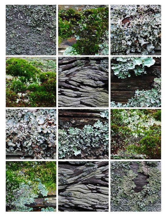 Moss and lichen printable instant download by NewCreatioNZ on Etsy, $10.00