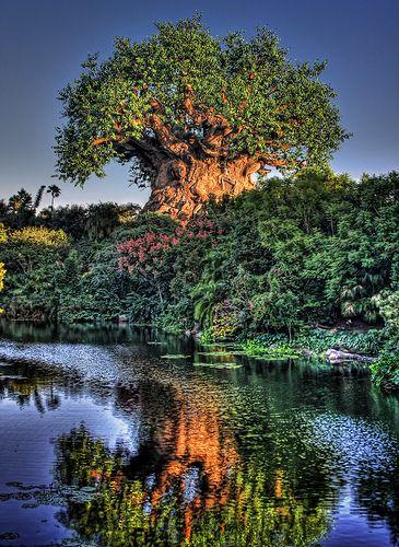 Walt Disney World's Animal Kingdom - Tree of Life!