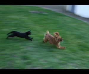 Cats vs Dogs FUNNY  ( Video )