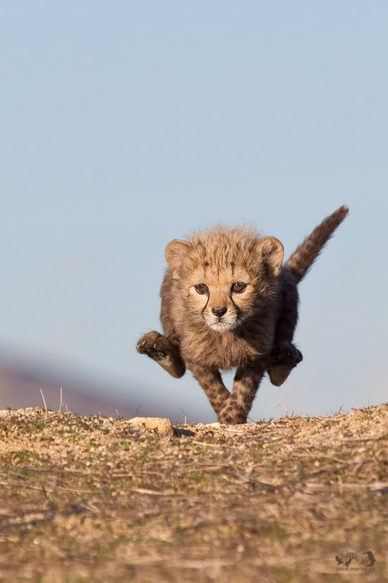 At full speed by Marion Vollborn, via 500px