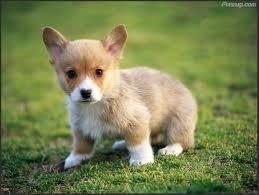 Cute pets :)