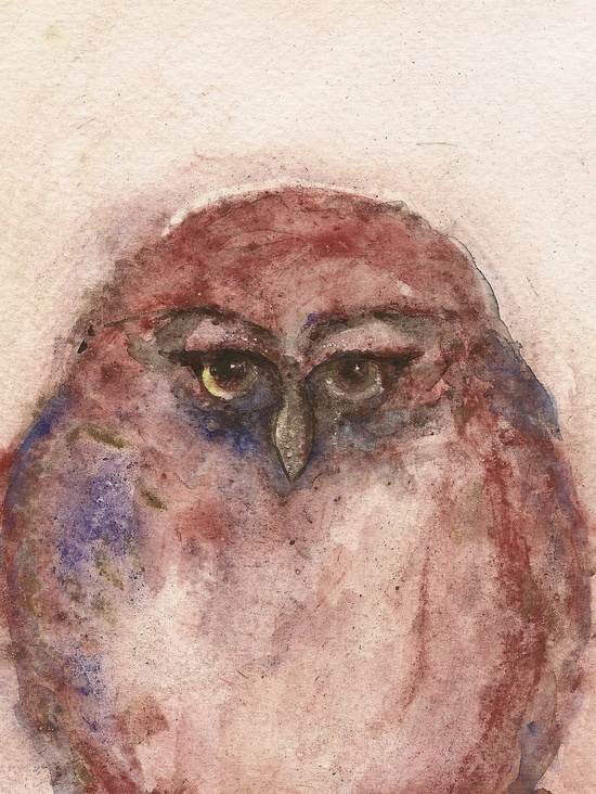 Little Owl Original watercolor painting animal by FrancinaMaria