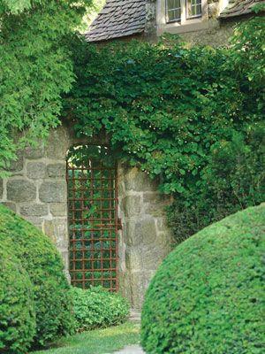 A venerable wrought-iron gate punctuates the stone wall below climbing Hydrangea petiolaris.