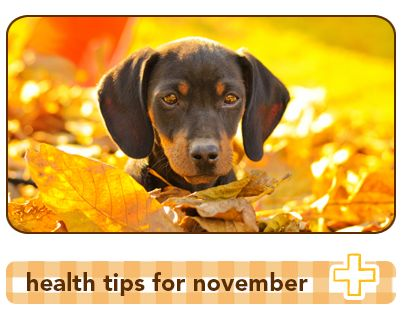 3 pet health tips to protect your pets in November