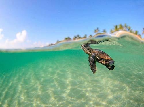 Sea turtle under sea