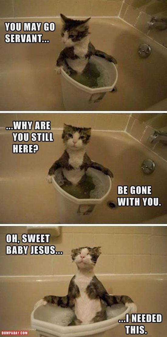 funny cat baths