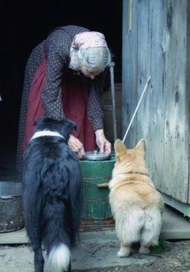 Tasha Tudor 1915 -2008 with her beloved Corgis