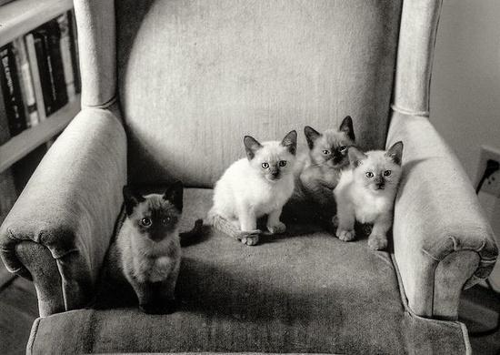 susu's kittens