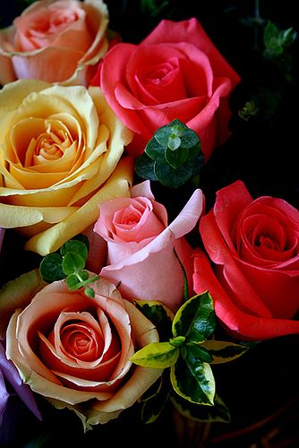Colored Roses.