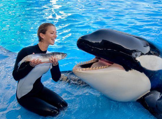 #SeaWorld Killer #Whale #killerwhale #orca