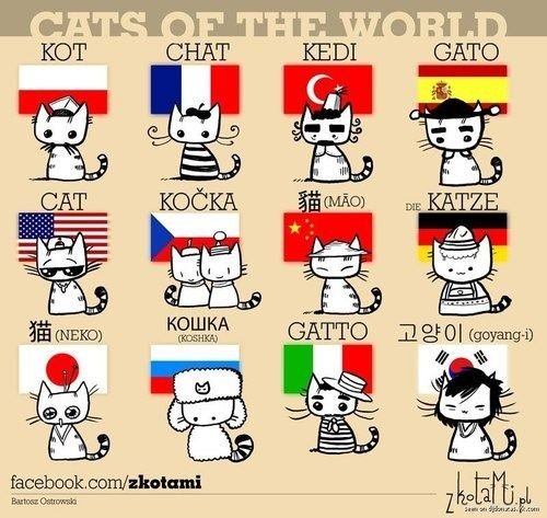 Cats of the World-just so you know
