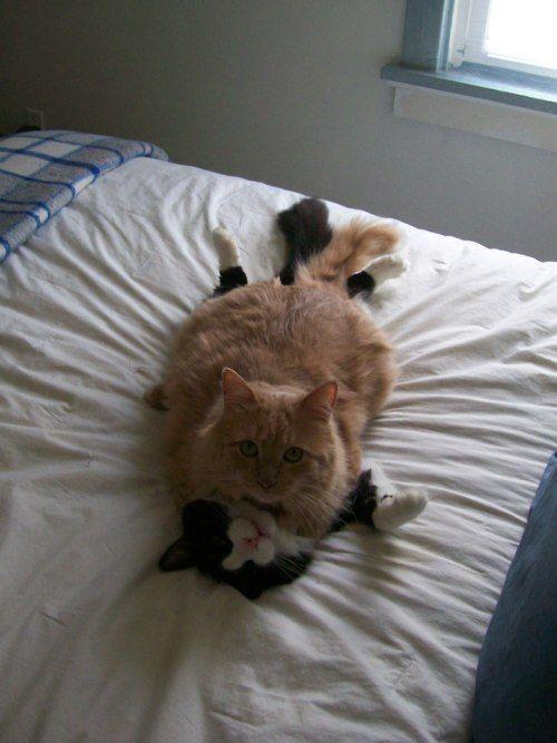 cat on cat ;)