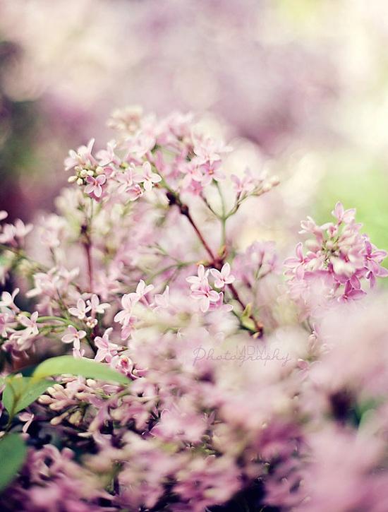 Little purple wild flowers