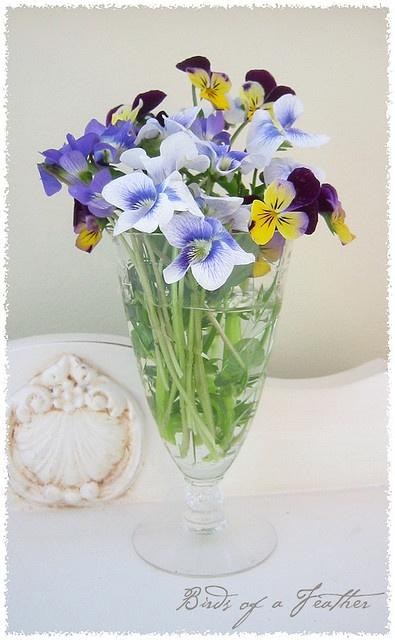 Violas and Violets