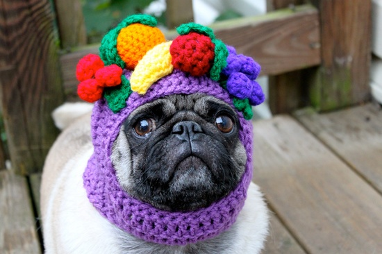 Sometimes, you just have to succumb to the urge to put a fruit bowl on your dog's head. $23