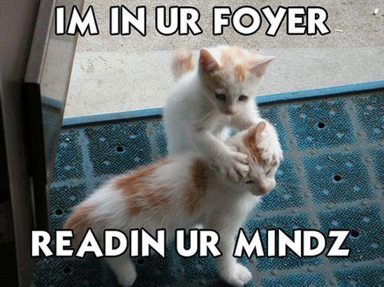 Funny Cat Photos foyer