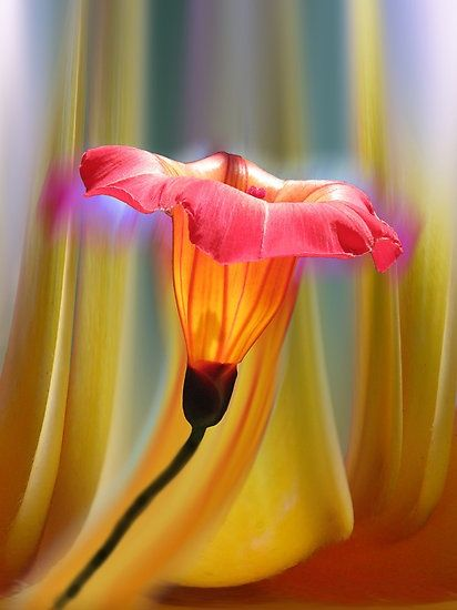 Awesome Flower
