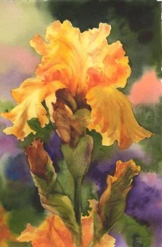 Golden Iris - Susie Short Watercolor Painting.