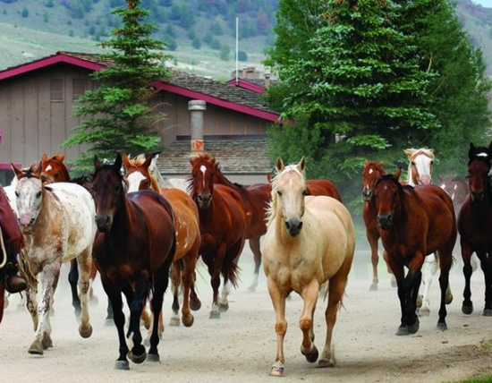 Tantalizing Travel: C Lazy U Ranch