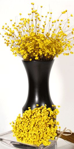 decorative branches and other lasting botanicals for decorating homes, businesses and events