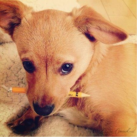 cute puppy :-) #fitz