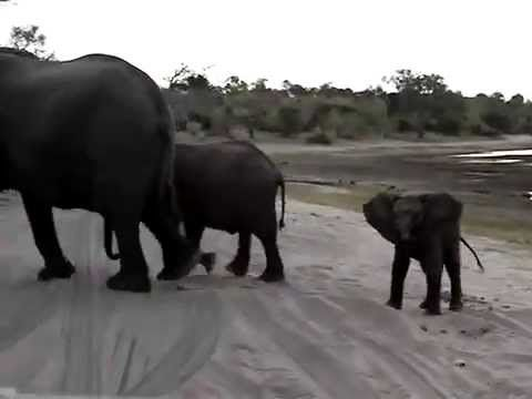 Funny Video : Baby Elephant