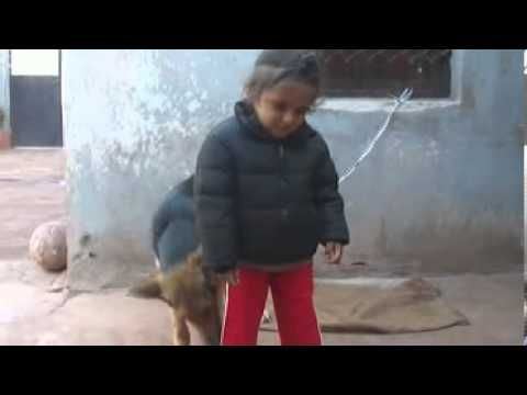 Kid play with pet dog funny video