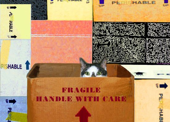 Handle With Care Cat Card Cat in Box by DeborahJulian on Etsy, $5.00