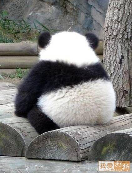 panda on a log -  cute