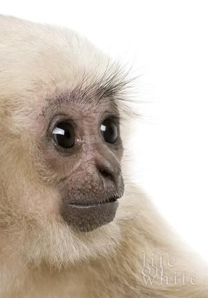 Cute Animals by MISSKAY95 #monkey #cute #animal