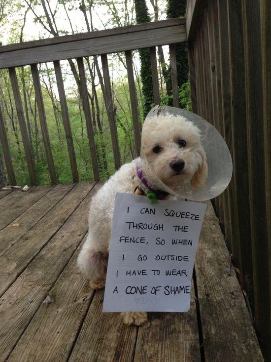 Adoptable Fridays: Meet Frasier!  #pets #dogs