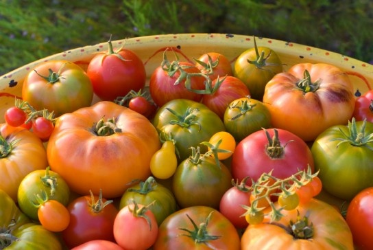 Heirloom Tomato Salsa Fresca