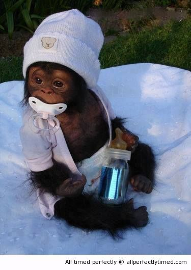An adorable baby monkey