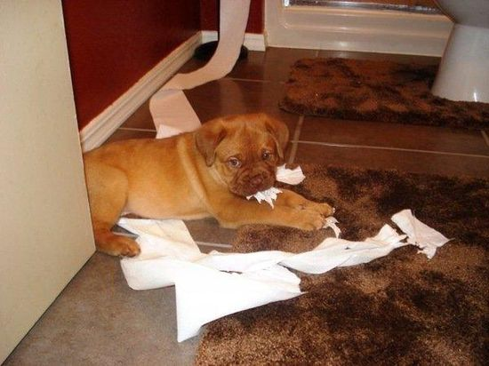 Did I do that? 9 cute pets causing trouble (Submitted by Kylee Wentworth)