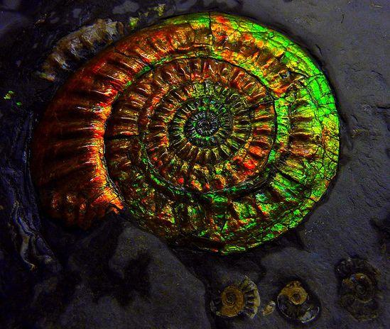 Opalized ammonite fossil  @Wayne Stratz