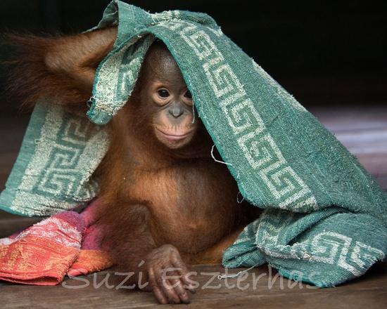 baby animal photographers