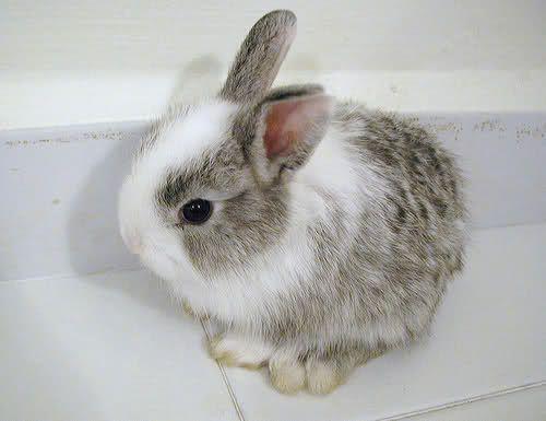 small little cute animals