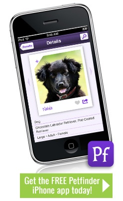 Petfinder has an all-new free iPhone app! Search for a pet, learn and share like never before!