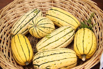 Delicata squash guide: What to look for, cooking tips & benefits