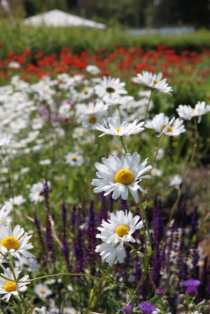 Tankar från Trädgårdsmästarn: sommar
